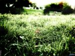 Grass_2048x1536.jpg