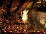 Lake_2_2048x1536.jpg