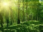 Spring forest with sun, Slovakia
