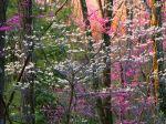 Shenandoah National Park, Virginia, U.S.