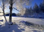 Snow covered trees, Sweden