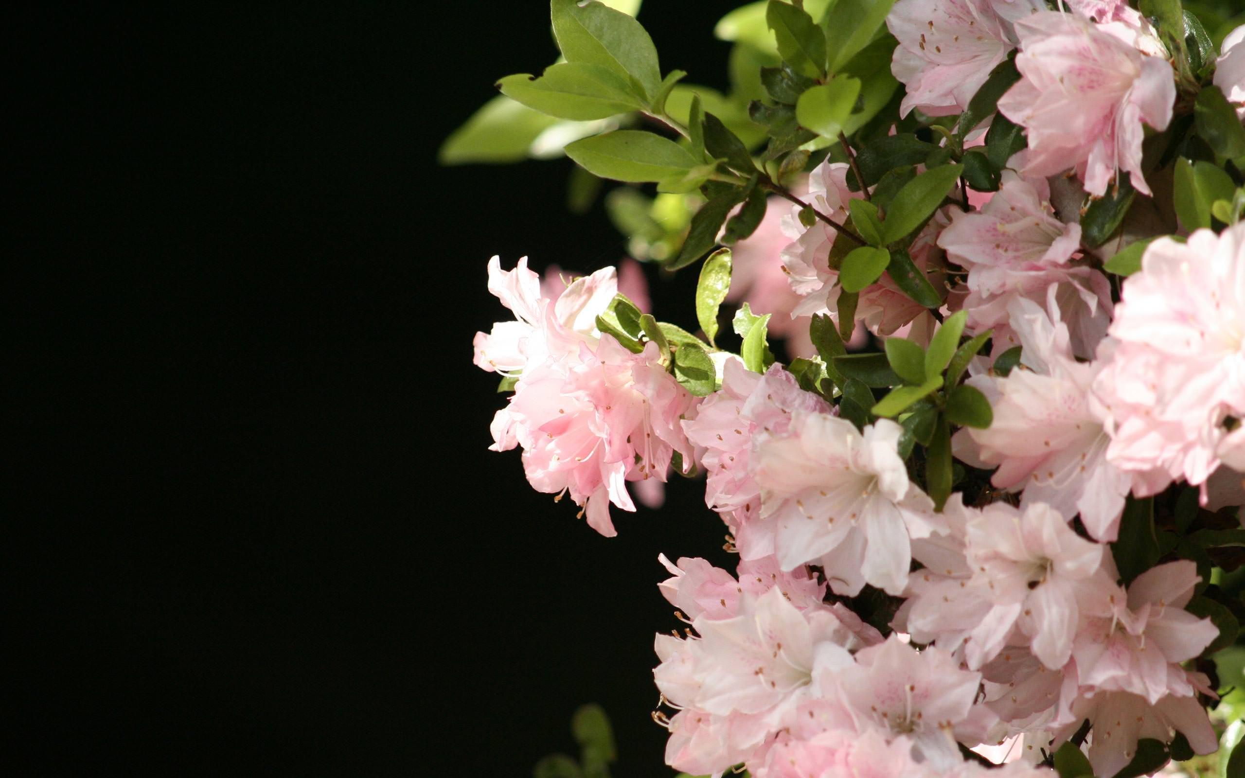 00352_flowerwall_2560x1600