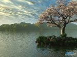 Cherry_Blossoms_at_Sunset_by_kabegami.jpg