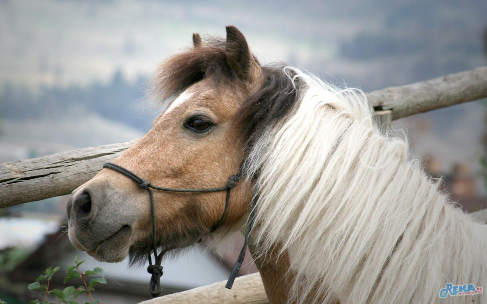 Horses Wallpapers 1920x1200-2