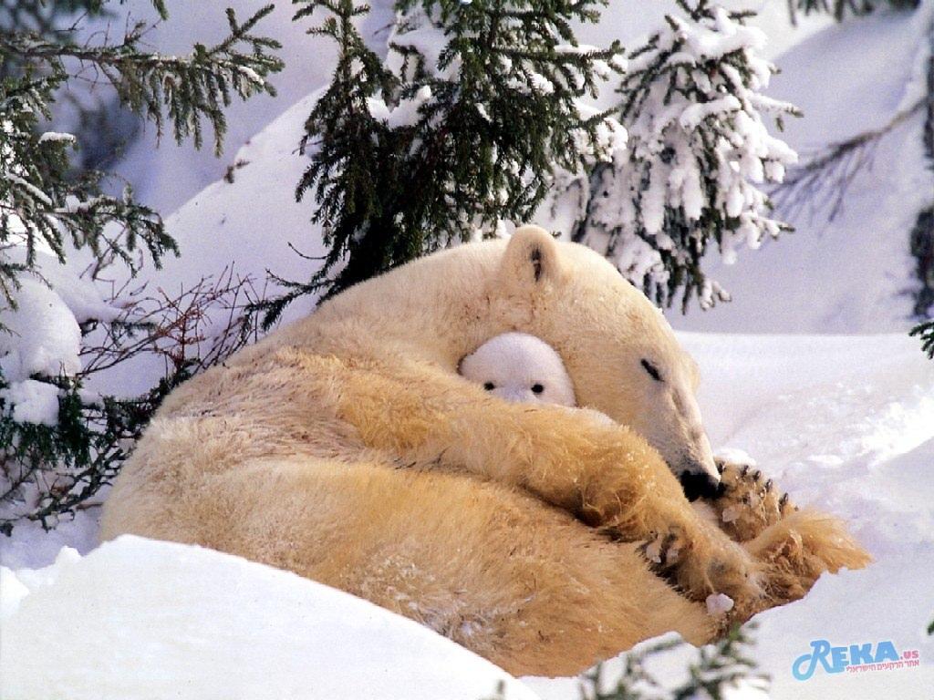 Polar_bear_-_a_naughty_tot.jpg