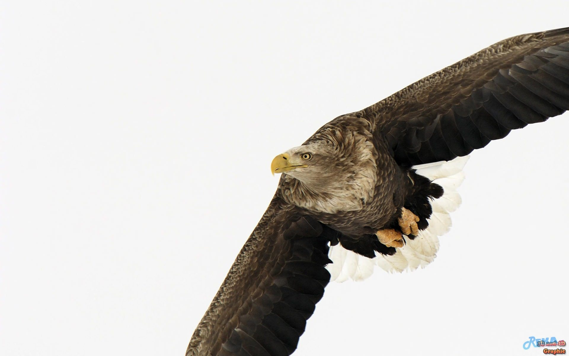 Полет орла загрузить