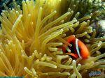 BaleineClownFish_1024.jpg