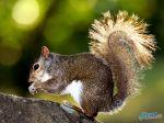 Brown_Squirrel_Eating_Nuts_On_A_Tree.jpg