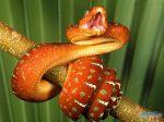 Dangerous_snake.jpg