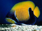 Deep_Sea_3D_-_Fish.jpg