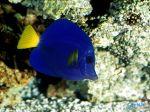 Deep_Sea_3D_-_inhabitants_Coral_reef,_fishes.jpg