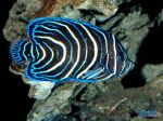 Deep_Sea_3D_-_inhabitants_coral_reef.jpg