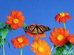 Flowerses_and_butterfly_-_Desktop_Wallpapers.jpg