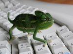 Iguana_-_home_animals.jpg