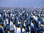 Multiplicity, King Penguins.jpg