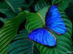 Tropics_butterfly.jpg