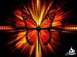 butterfly-wallpaper-1024.jpg