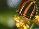 butterflyshow1280x1024ls.jpg