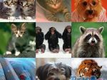 collage Wallpapers - Animals.JPG