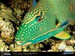 parrot-fish.jpg