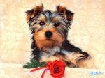 ws_Cute_Dog_1024x768.jpg