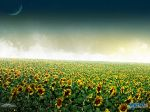 Sunflowers_by_Joker84.jpg