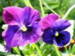 flowers_021