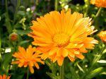 flowers_024