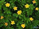 flowers_026