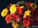 flowers_027
