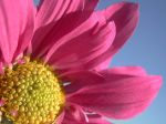 flowers_038