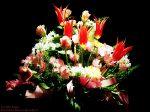 flowers_040