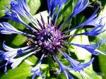 flowers_055
