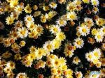 flowers_057