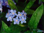 flowers_058