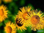 flowers_061