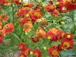 flowers_064