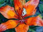 flowers_072