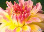 flowers_077