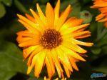 flowers_083