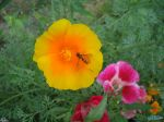 flowers_093