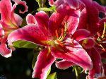 flowers_094