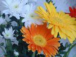 flowers_098