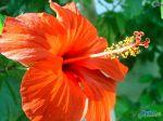 flowers_109