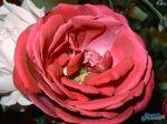 flowers_115