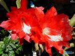 flowers_117