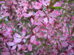 flowers_227