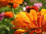 flowers_243