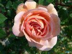flowers_246