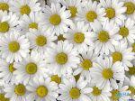 flowers_247
